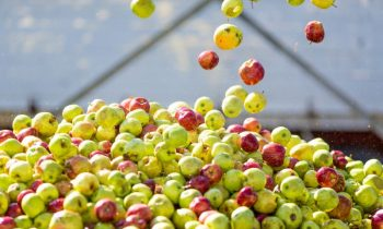 Austria Juice entwickelt Getränkelösungen für Saftapplikationen. Die neueste Entwicklung bei 100-Prozent-Säften: 100 Prozent Frucht bei nur 70 Prozent Kalorien (Bild: Austria Juice).
