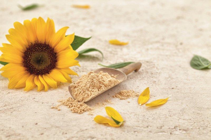 Mit Lecithin aus Sonnenblume können künstliche Emulgatoren oder Allergene von der Zutatenliste entfernt werden (Bild: Sternchemie).
