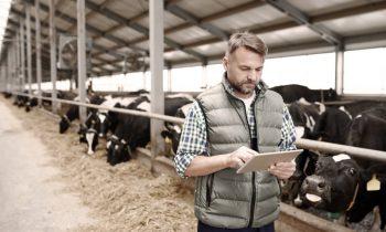 Das Erzeuger-Informationssystem erleichtert die Zusammenarbeit zwischen Molkereien und Milcherzeugern (Bild: GUS Holding).